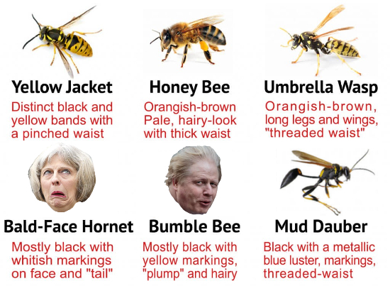 Wasps and bees' numbers have fallen 50% in 20 years. We need pollinators. Asian hornet invasion. Who'll be buzzin this week? Theresa May or Boris?