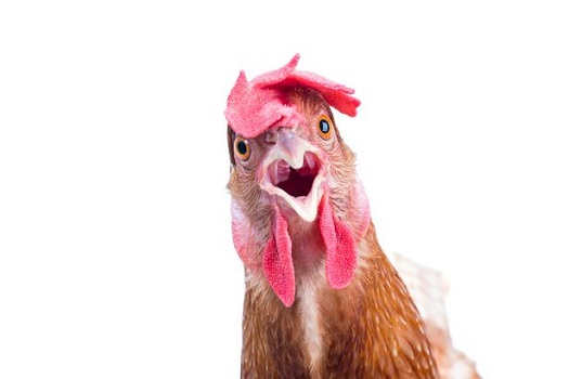 Killing the chicken to scare the monkeys, Chinese technology regulators